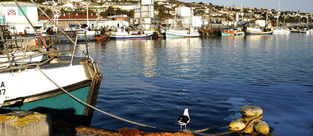 South African Garden Route Mossel Bay Town Travel Information
